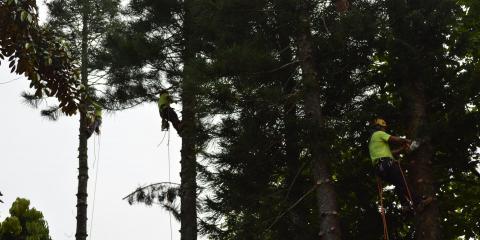 3 Reasons Big Island Tree Service is the Best Arborist in Keaau, Keaau-Mountain View, Hawaii