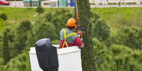 Why It's Important to Choose a Licensed & Insured Tree Service, High Point, North Carolina