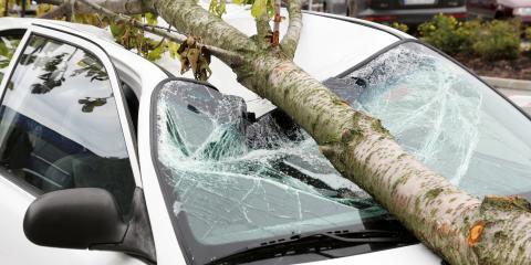 3 Signs of a Dangerous Tree, Winston-Salem, North Carolina