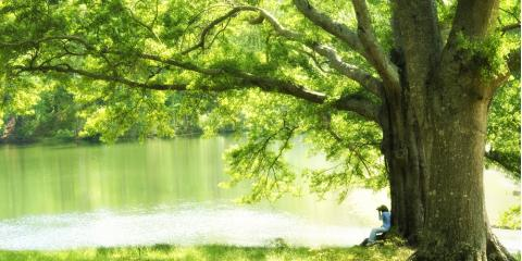 5 Signs Your Tree Is Dying, Brewster, New York