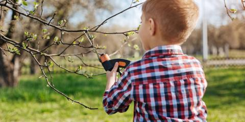 4 Tips From Tree Service Experts for Cleaning Up After a Storm, Milton, Pennsylvania