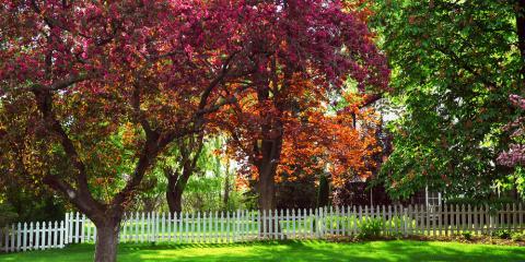 The Top 3 Benefits of Tree Fertilization, North Huntingdon, Pennsylvania