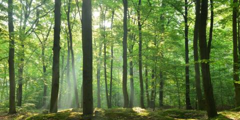 5 Intriguing Facts About Trees, Clinton, Michigan
