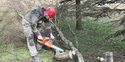 The Do's & Don'ts of Tree Maintenance, Newport-Fort Thomas, Kentucky