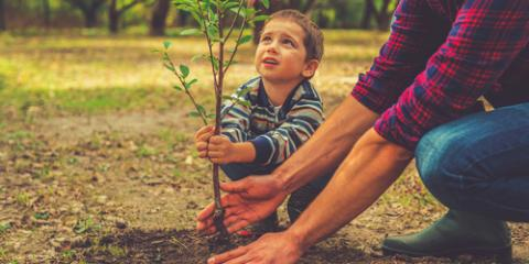What You Should Know Before Planting a Sapling, West Hartford, Connecticut