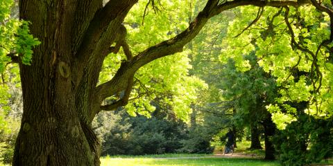 5 Signs You Should Contact a Tree Specialist, North Huntingdon, Pennsylvania