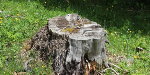 5 Benefits of Tree Stump Removal, Henrietta, New York