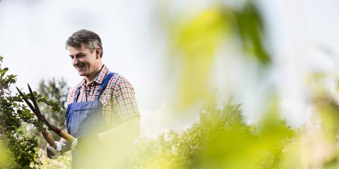 Top 3 Reasons to Schedule Regular Tree Trimming, Baldwin, Georgia