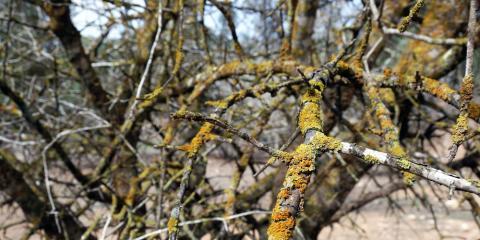 Tree Treatment Advice: How to Handle a Dying Tree, Midland City, Alabama