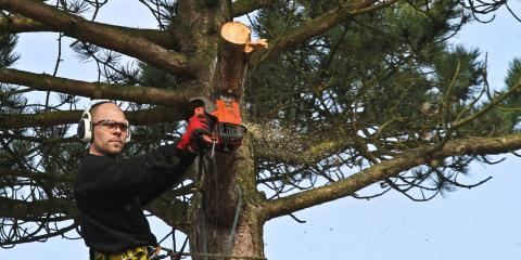 3 Top Benefits of Professional Tree Trimming, Anchorage, Alaska