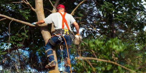 Your Guide to Tree Trimming & Power Line Damage, Anchorage, Alaska