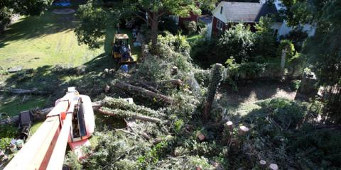 Danbury's Tree Care Experts on the Benefits of Tree Trimming, Danbury, Connecticut