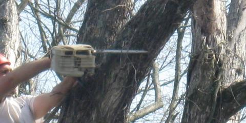 3 Reasons Tree Trimming Should Be Part of Regular Home Maintenance, Dexter, Kentucky
