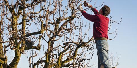 3 Reasons to Hire a Professional Tree Trimming Service, Ewa, Hawaii