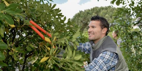 The Benefits of Hiring a Professional Tree Trimming Service, Marinette, Wisconsin