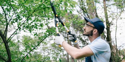 4 Benefits of Tree Pruning, North Royalton, Ohio