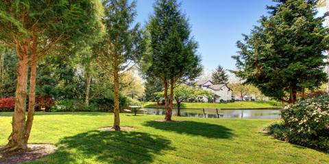 3 Facts To Know About Pruning Trees   Eldridge Arborist ...