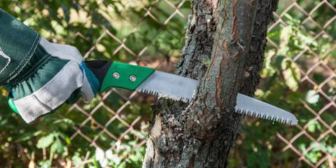 3 Reasons to Hire a Professional for Tree Trimming, Hawthorne, Florida