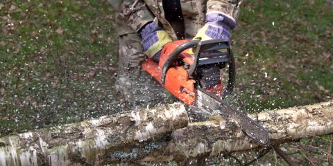 Why You Shouldn't Try DIY Tree Trimming or Removal, Anchorage, Alaska