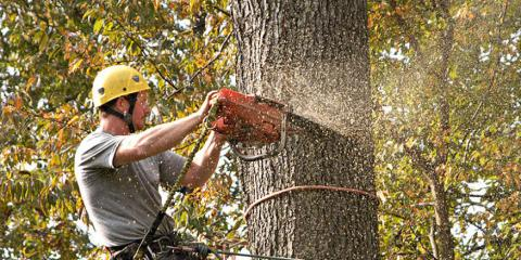 4 Tree Services to Control Branches From Marinette's Best Tree Company, Marinette, Wisconsin