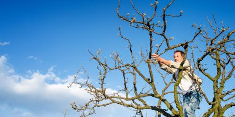 Why Tree Pruning Is Essential , Milford, Ohio