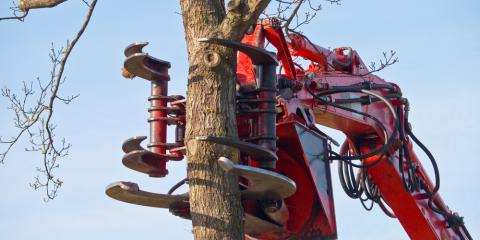 Reasons to Hire a Professional for Tree Work, Blue Ash, Ohio