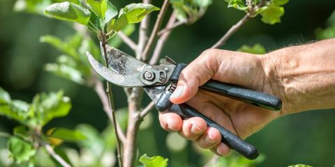 How to Avoid 5 Tree Pruning & Trimming Mistakes, Midland City, Alabama