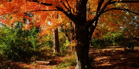 Park It! Great Places We Love in Worcester County, Worcester, Massachusetts