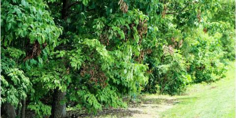 West Hartford's Premier Arborists Provide Tree & Shrub Care Tips, West Hartford, Connecticut