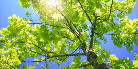 Contact The Pros of All Season Tree Care For Tree Maintenance This Spring, Shrub Oak, New York