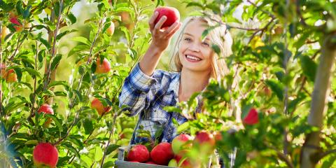 Why Fruit Trees Need Pruning, Cincinnati, Ohio