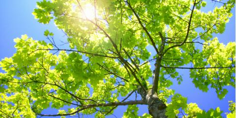 Grow a Lush & Healthy Yard This Spring With These Tree Maintenance Tips From All Seasons Tree Care, Shrub Oak, New York