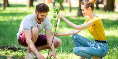 5 Tips for Planting a Tree in Your Backyard, Hawaii County, Hawaii