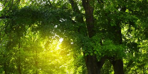 A Tree Care Expert Explains Why Tree Topping Is a Last Resort, Brewster, New York