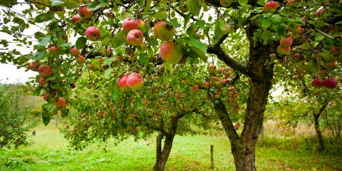 FAQ About Caring for Fruit Trees in Indiana, De Motte, Indiana