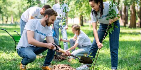 3 Reasons to Plant Trees in Your Backyard , Hawaii County, Hawaii