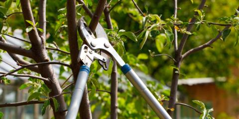 Top 3 Reasons for Tree Trimming & Pruning , Harrison, Ohio