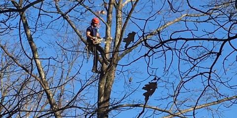Become a Tree Trimming Professional with Terry Tree Service, Henrietta, New York