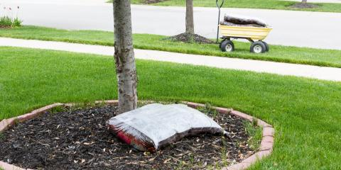 3 Tree Care Tips for Spring, York, South Carolina