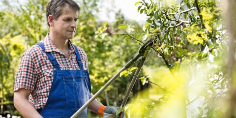 Do I Need Tree Pruning Services?, Holland, Wisconsin