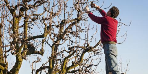3 Benefits of Winter Tree Removal & Pruning, Commerce, Georgia