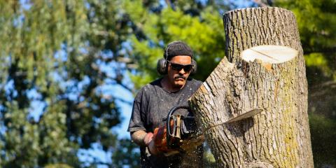 What You Need to Know About Tree Removal, Wharton, New Jersey