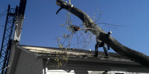 Call A&M Crane and Rigging for All of Your Emergency Tree Service Needs, High Point, North Carolina