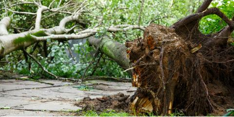 What Damage Can Dead Trees Cause to My Yard?, Mukwonago, Wisconsin