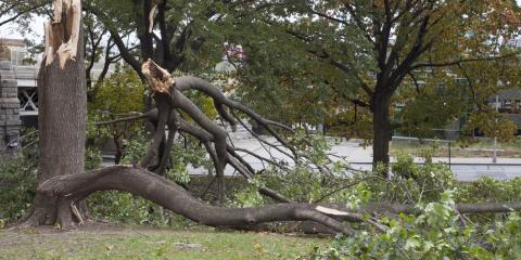 4 Reasons to Hire Tree Removal Experts to Clean Up Damage After a Storm, Jessup, Maryland