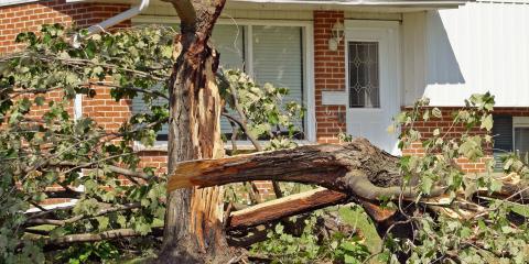 3 Signs a Tree Might Fall Over , Ewa, Hawaii