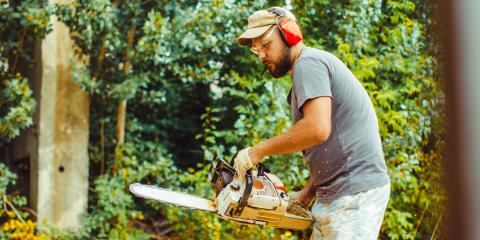 5 Signs it's Time to Schedule Tree Removal, St. Louis, Missouri