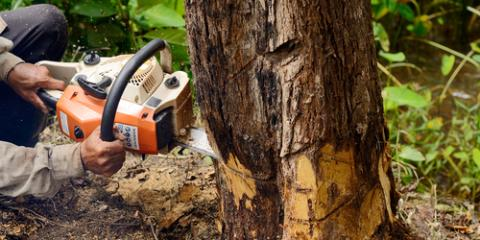 What Happens During the Tree Removal Process?, High Point, North Carolina
