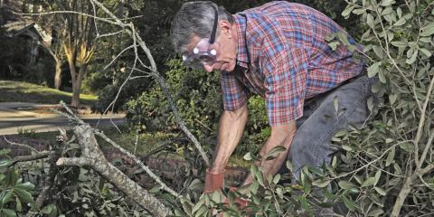 3 Things to Consider When Hiring a Tree Removal Service, Anchorage, Alaska