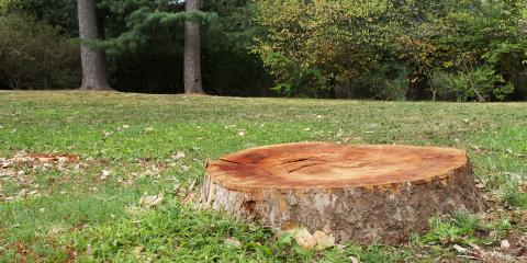 3 Reasons You Need Tree Stump Removal, Crescent, Wisconsin